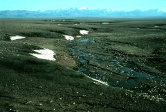Porcupine caribou herd in the Arctic National Wildlife Refuge.  Source: USFWS