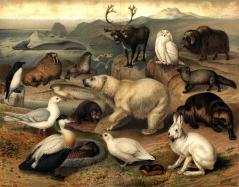 """""""Arktisk fauna"""" from Nordisk familjebok (1915), vol.21, Till art. Polarländer.  Source: Wikimedia Commons."""