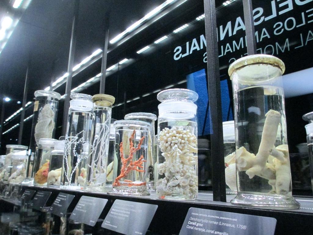 Museu de Ciències Naturals (Museu Blau).