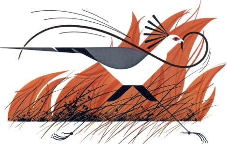 Secretary Bird and Mamba by Charley Harper.  The Animal Kingdom, 1967.