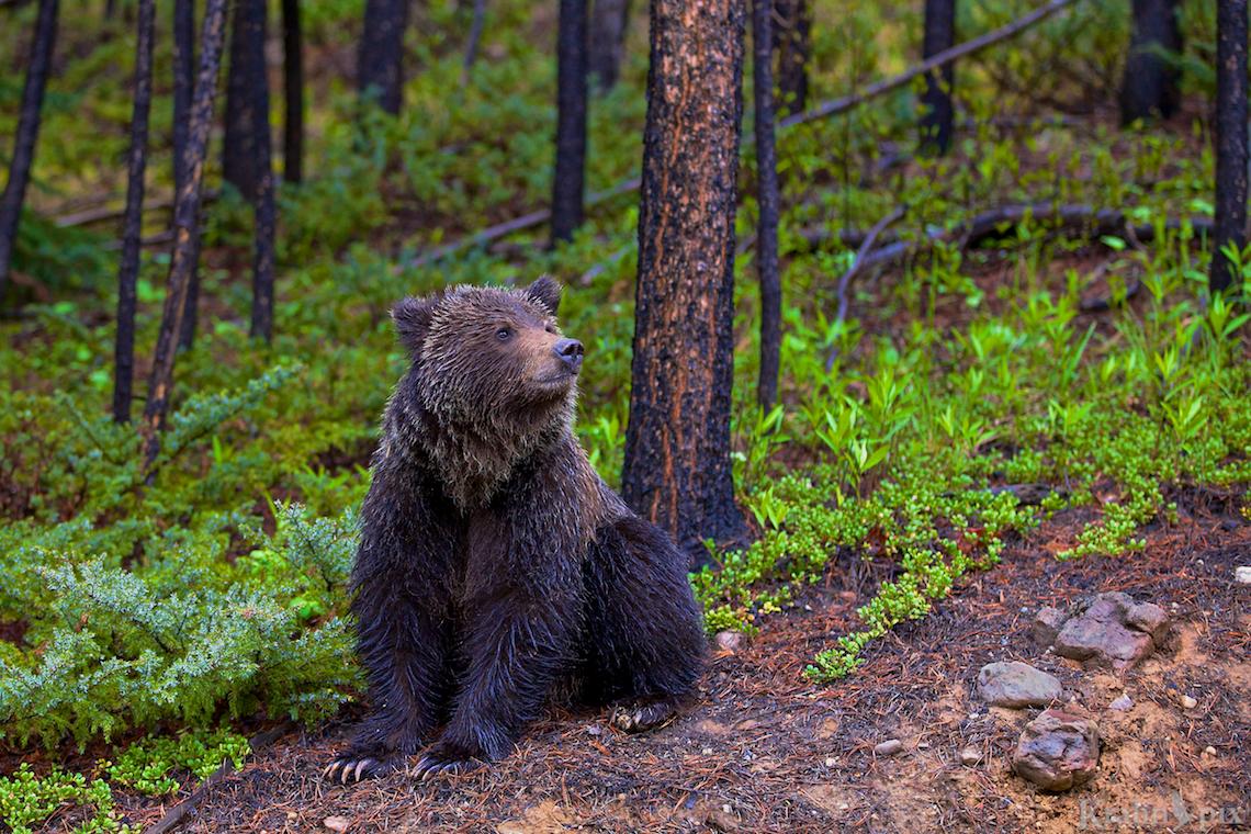 © Lyle Krahn.  http://krahnpix.com/