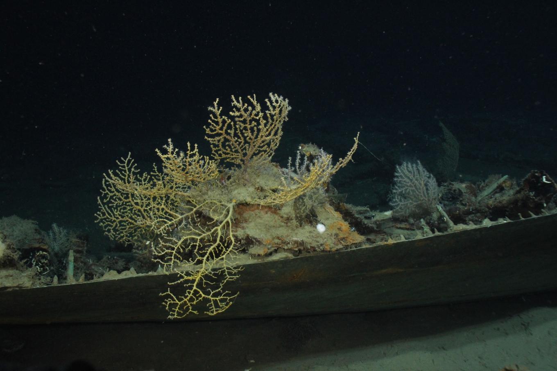 NOAA Ocean Explorer: Lophelia II 2009: Deepwater Coral Expedition