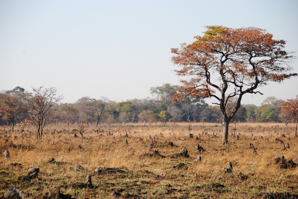 Small termite mounds in Zambia.  Photo: LGO'Brien on Flickr (Creative Commons)