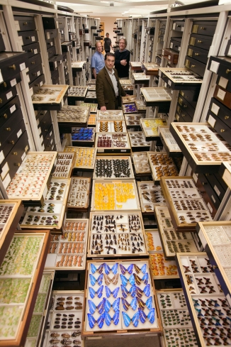 A presentation of entomology specimens arranged within one aisle of the Entomology Department compactor collection cabinets at the Smithsonian Institution's National Museum of Natural History. Designed to illustrate the size and scope of the Entomology collection. May 9, 2006. Featured researchers: Dr. David Furth, Collections Manager; Dr. Ted Schultz, Research Entomologist; Dr. Jonathan Coddington, Senior Scientist; Patricia Gentili-Poole, Museum Technician.