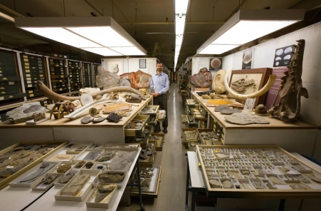 A view of one part of the Paleontology collection in the Smithsonian Institution's National Musuem of Natural History, arranged by the addition of representative specimens from other parts of the three floors of fossils in the East Wing. Staff: Dr. Scott Wing, Chairman of the Department of Paleontology.