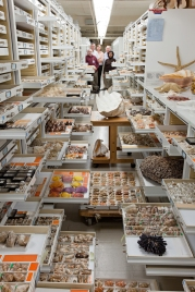 Collections from the Department of Invertebrate Zoology are displayed at the Smithsonian Institution's National Museum of Natural History. Invertebrate Zoology Staff present: Paul Greenhall, Robert Hershler, Ellen Strong, Jerry Harasewych, and Linda Cole.